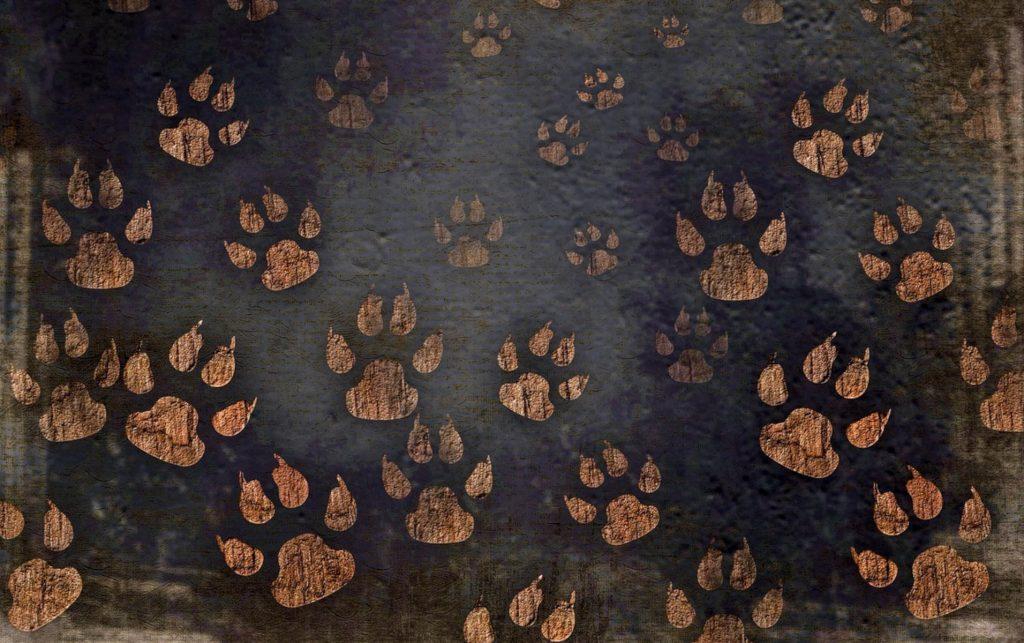 Κοντιάδης Ξενοφών: Δικαιώματα για τα ζώα: τι λέει η πολιτική θεωρία